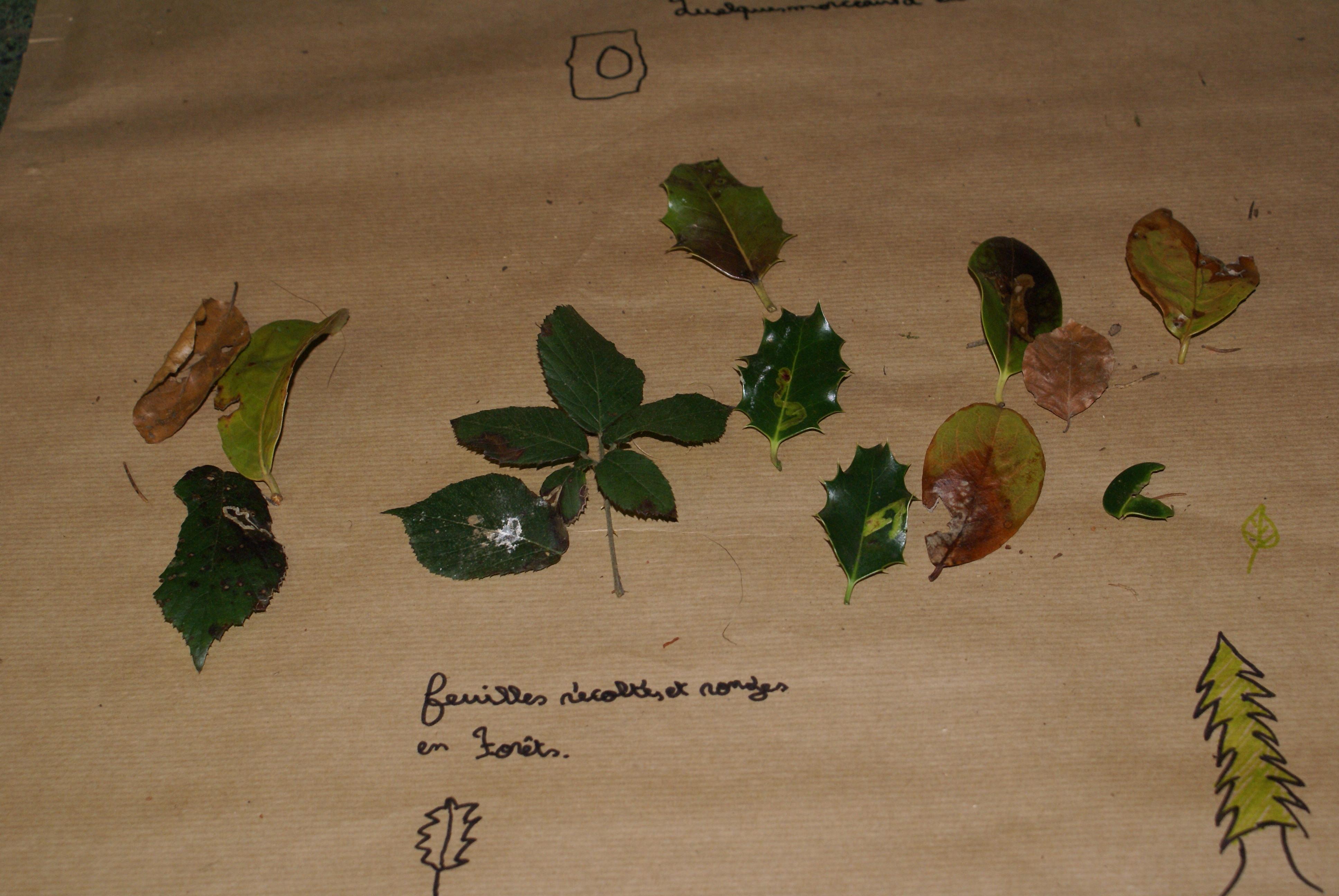 Je découvre les feuilles