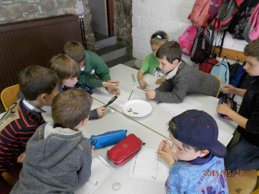 Gîte Classes Vertes